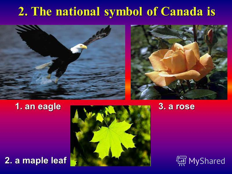 2. The national symbol of Canada is 1. an eagle 3. a rose 2. a maple leaf 2. a maple leaf