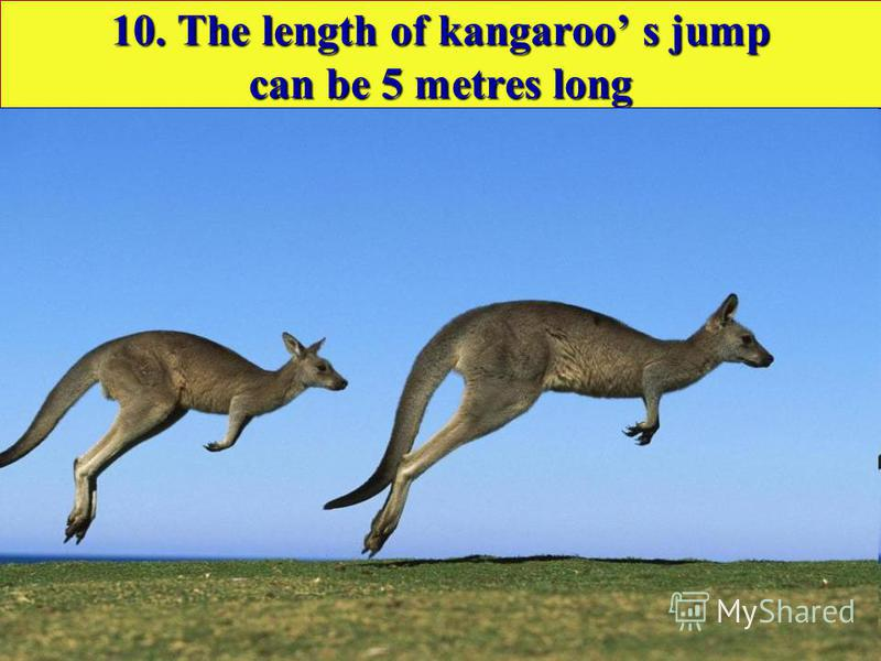 10. The length of kangaroo s jump can be 5 metres long