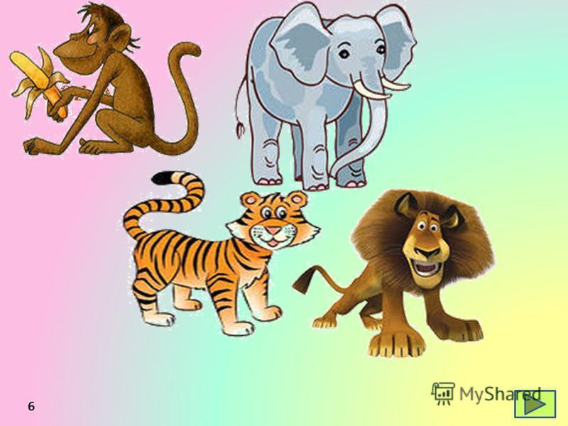 6 der Affe der Tiger der Elefant der Löwe