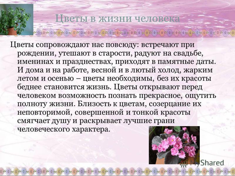 Цветы в жизни человека Цветы сопровождают нас повсюду: встречают при рождении, утешают в старости, радуют на свадьбе, именинах и празднествах, приходят в памятные даты. И дома и на работе, весной и в лютый холод, жарким летом и осенью – цветы необход