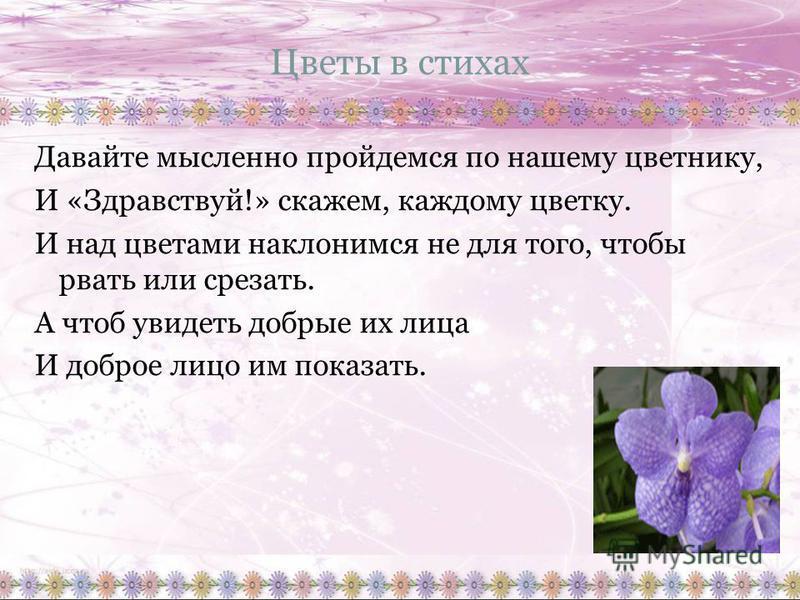 Цветы в стихах Давайте мысленно пройдемся по нашему цветнику, И «Здравствуй!» скажем, каждому цветку. И над цветами наклонимся не для того, чтобы рвать или срезать. А чтоб увидеть добрые их лица И доброе лицо им показать.