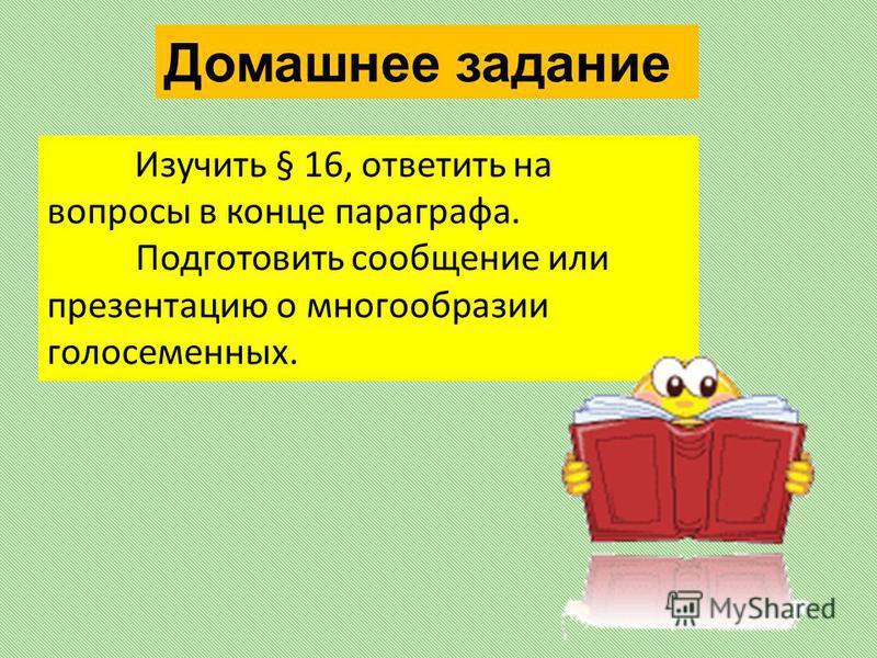Изучить § 16, ответить на вопросы в конце параграфа. Подготовить сообщение или презентацию о многообразии голосеменных. Домашнее задание
