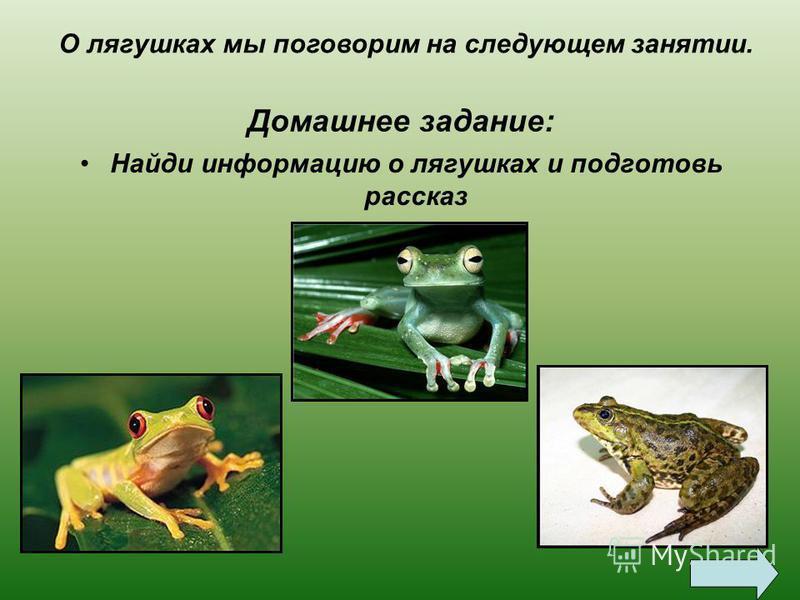 Прискакала к терему…лягушка-квакушка