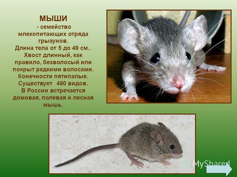 Стоит в поле теремок. Бежит мимо… мышка-норушка.