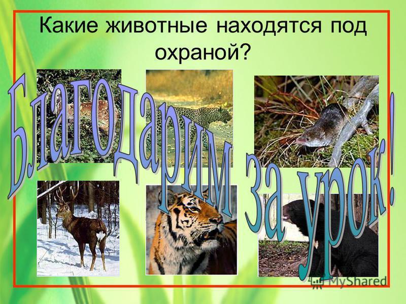 Какие животные находятся под охраной?