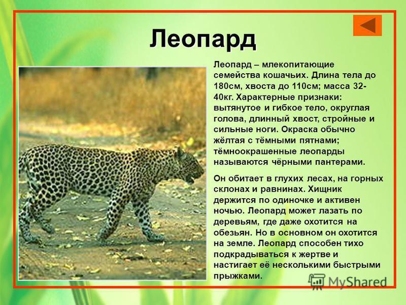 Леопард Леопард – млекопитающие семейства кошачьих. Длина тела до 180 см, хвоста до 110 см; масса 32- 40 кг. Характерные признаки: вытянутое и гибкое тело, округлая голова, длинный хвост, стройные и сильные ноги. Окраска обычно жёлтая с тёмными пятна