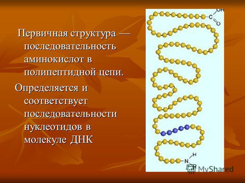 Первичная структура последовательность аминокислот в полипептидной цепи. Первичная структура последовательность аминокислот в полипептидной цепи. Определяется и соответствует последовательности нуклеотидов в молекуле ДНК