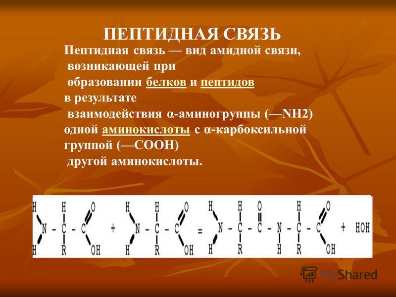 ПЕПТИДНАЯ СВЯЗЬ Пептидная связь вид амидной связи, возникающей при образовании белков и пептидовбелковпептидов в результате взаимодействия α-аминогруппы (NH2) одной аминокислоты с α-карбоксильнойаминокислоты группой (СООН) другой аминокислоты.