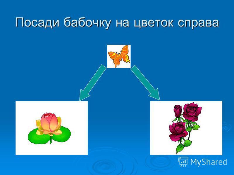 Посади бабочку на цветок справа