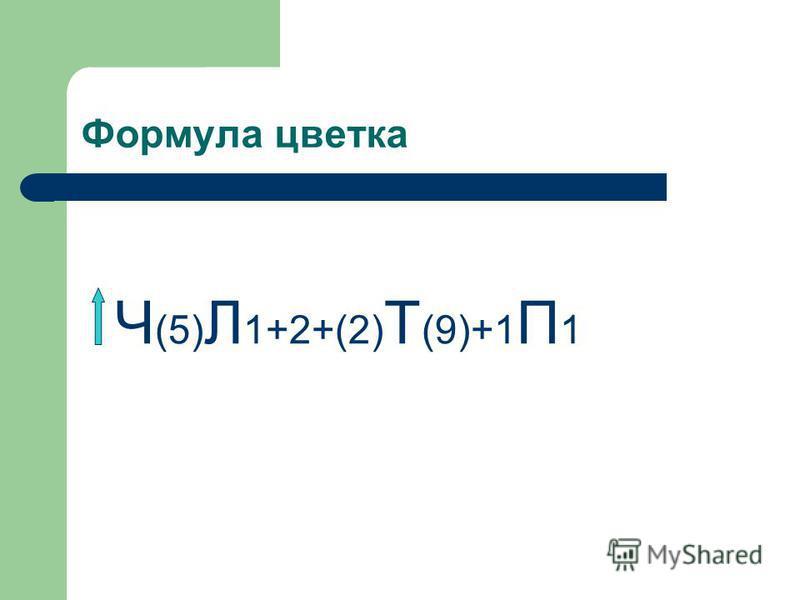 Формула цветка Ч (5) Л 1+2+(2) Т (9)+1 П 1