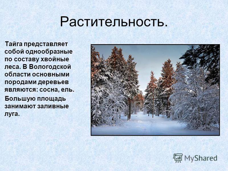 Растительность. Тайга представляет собой однообразные по составу хвойные леса. В Вологодской области основными породами деревьев являются: сосна, ель. Большую площадь занимают заливные луга.