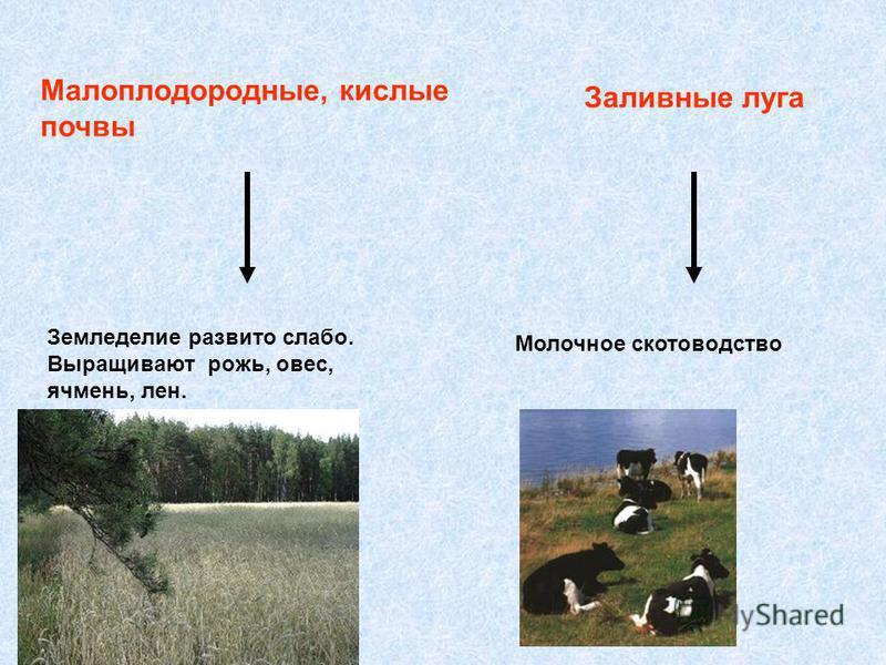 Малоплодородные, кислые почвы Земледелие развито слабо. Выращивают рожь, овес, ячмень, лен. Заливные луга Молочное скотоводство