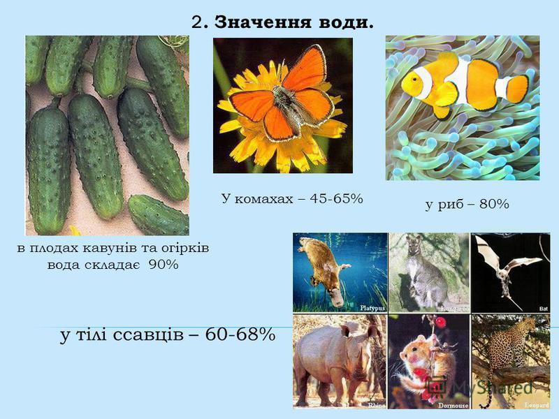 2. Значення води. в плодах кавунів та огірків вода складає 90% У комахах – 45-65% у тілі ссавців – 60-68% у риб – 80%