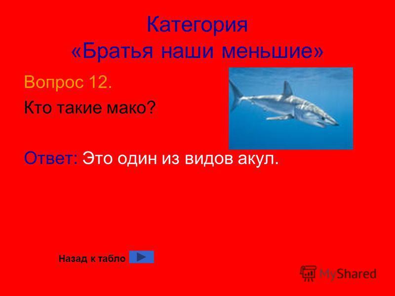 Категория «Братья наши меньшие» Вопрос 12. Кто такие мако? Ответ: Это один из видов акул. Назад к табло