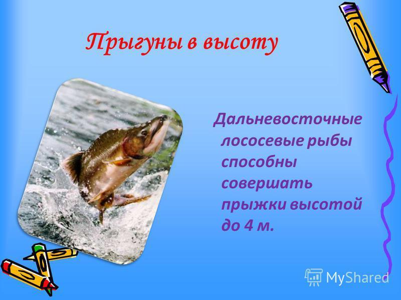 Прыгуны в высоту Дальневосточные лососевые рыбы способны совершать прыжки высотой до 4 м.
