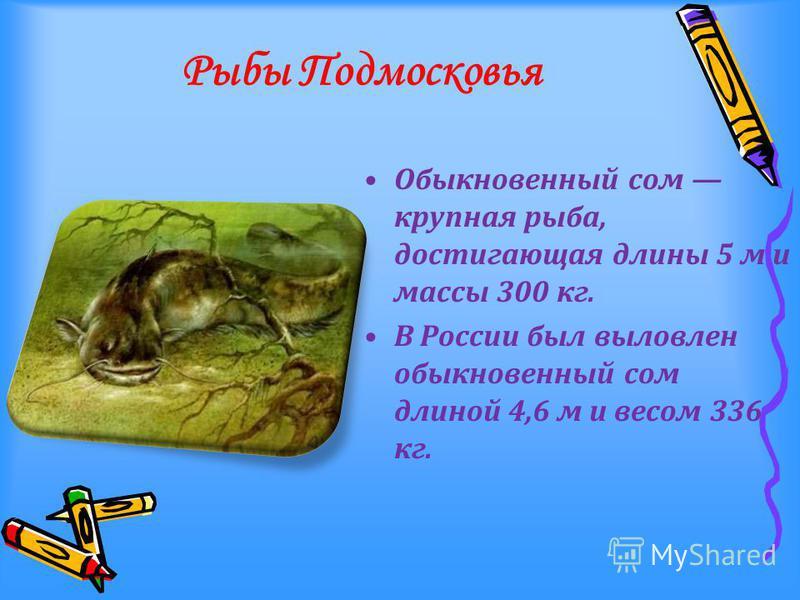Рыбы Подмосковья Обыкновенный сом крупная рыба, достигающая длины 5 м и массы 300 кг. В России был выловлен обыкновенный сом длиной 4,6 м и весом 336 кг.