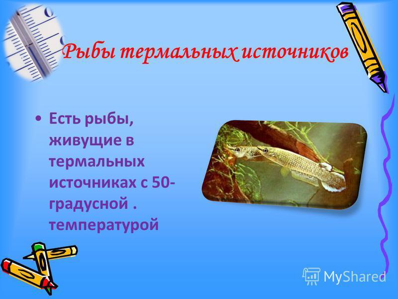 Рыбы термальных источников Есть рыбы, живущие в термальных источниках с 50- градусной. температурой