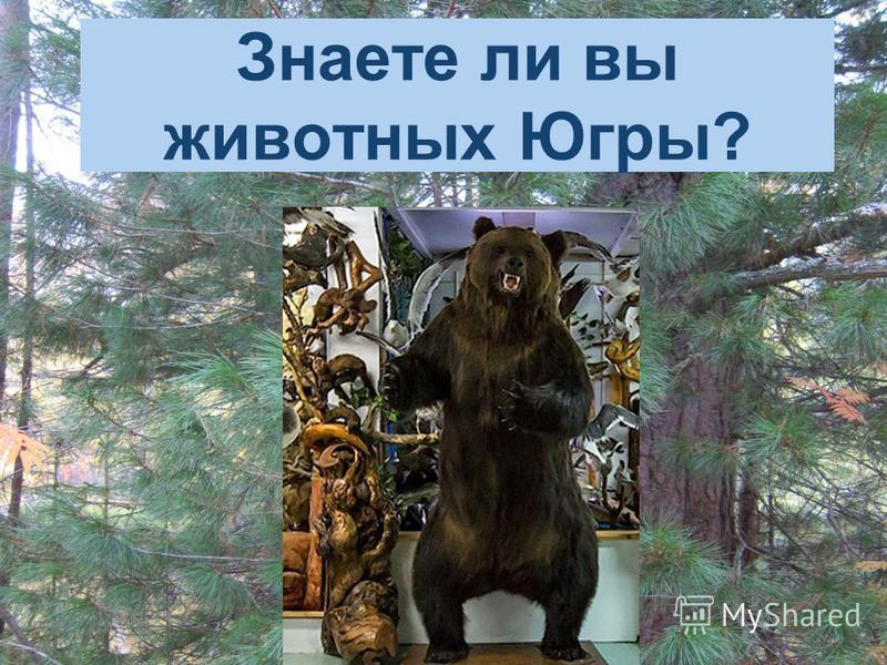 Знаете ли вы животных Югры?