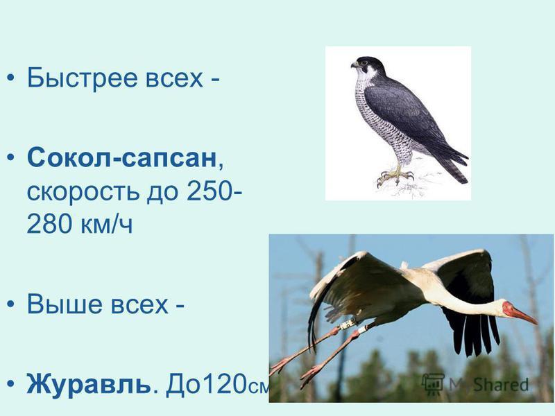Быстрее всех - Сокол-сапсан, скорость до 250- 280 км/ч Выше всех - Журавль. До 120 см