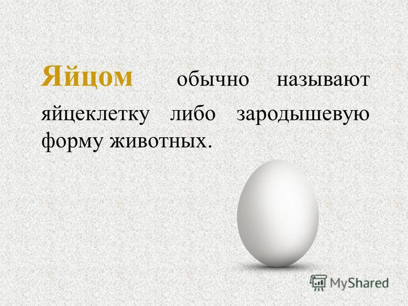 Яйцом обычно называют яйцеклетку либо зародышевую форму животных.