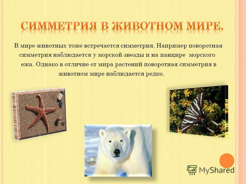 В мире животных тоже встречается симметрия. Например поворотная симметрия наблюдается у морской звезды и на панцире морского ежа. Однако в отличие от мира растений поворотная симметрия в животном мире наблюдается редко.