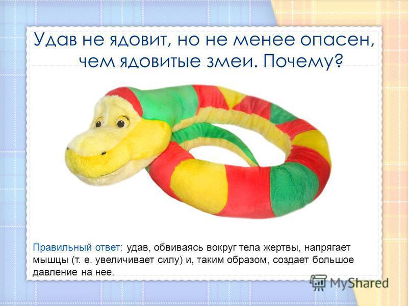 Удав не ядовит, но не менее опасен, чем ядовитые змеи. Почему? Правильный ответ: удав, обвиваясь вокруг тела жертвы, напрягает мышцы (т. е. увеличивает силу) и, таким образом, создает большое давление на нее.