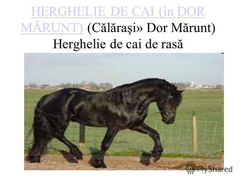 HERGHELIE DE CAI (în DOR MĂRUNT)HERGHELIE DE CAI (în DOR MĂRUNT) (Călăraşi» Dor Mărunt) Herghelie de cai de rasă