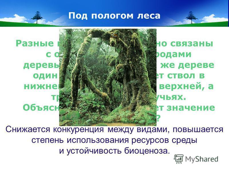 www.themegallery.com Company Logo Под пологом леса Разные виды короедов тесно связаны с определенными породами деревьев. На одном и том же дереве один вид жуков заселяет ствол в нижней части, другой – в верхней, а третий – живут на сучьях. Объясните