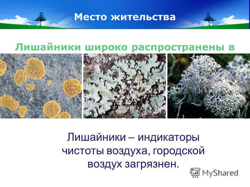 www.themegallery.com Company Logo Место жительства Лишайники широко распространены в природе, способны жить в очень суровых, с точки зрения человека условиях, но при этом почти не встречаются в городах. Почему? Лишайники – индикаторы чистоты воздуха,