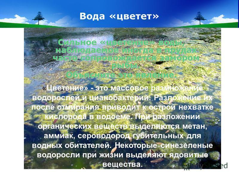 www.themegallery.com Company Logo Вода «цветет» Сильное «цветение» воды, наблюдаемое иногда в прудах часто сопровождается замором рыбы. Объясните это явление. «Цветение» - это массовое размножение водорослей и цианобактерий. Разложение их после отмир