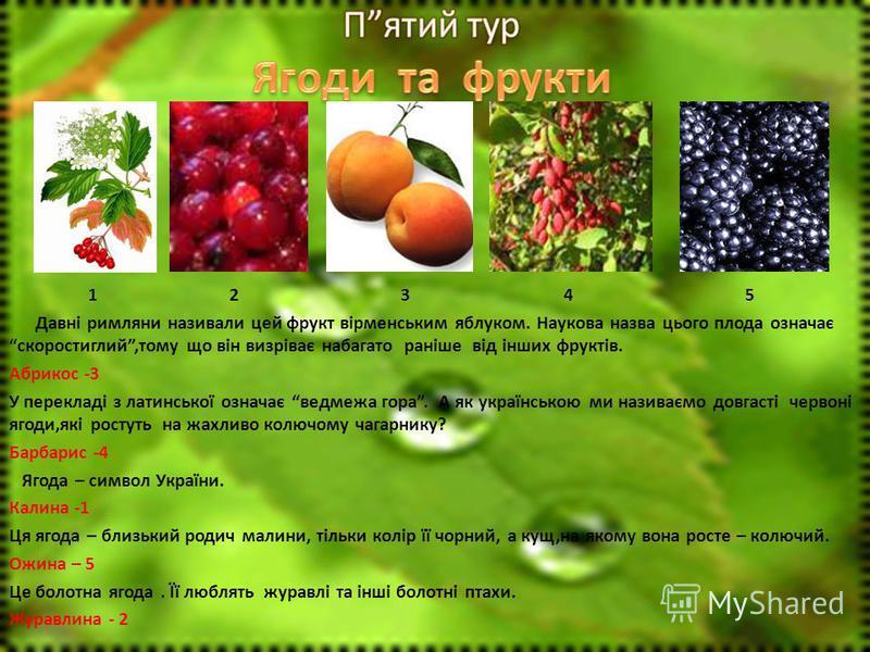 1 2 3 4 5 Давні римляни називали цей фрукт вірменським яблуком. Наукова назва цього плода означає скоростиглий,тому що він визріває набагато раніше від інших фруктів. Абрикос -3 У перекладі з латинської означає ведмежа гора. А як українською ми назив
