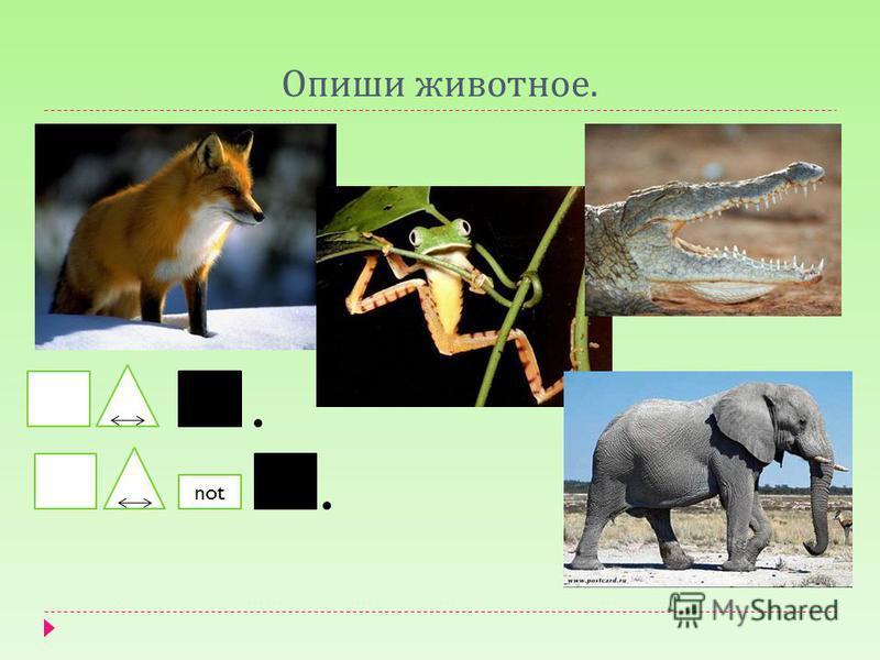 Опиши животное. not