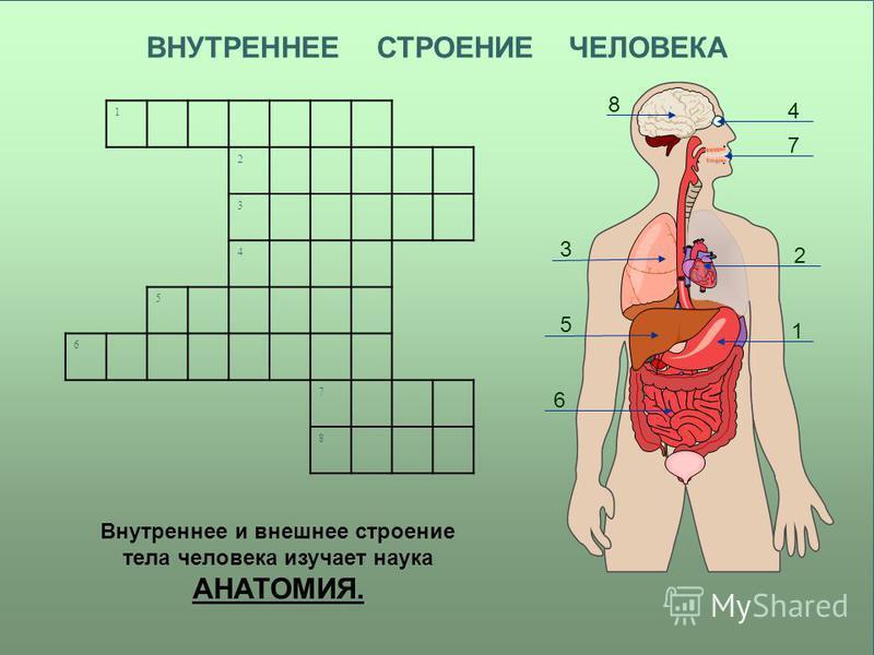 ВНУТРЕННЕЕ СТРОЕНИЕ ЧЕЛОВЕКА Внутреннее и внешнее строение тела человека изучает наука АНАТОМИЯ. 1 3 2 4 5 8 6 7 1 2 3 4 5 6 7 8