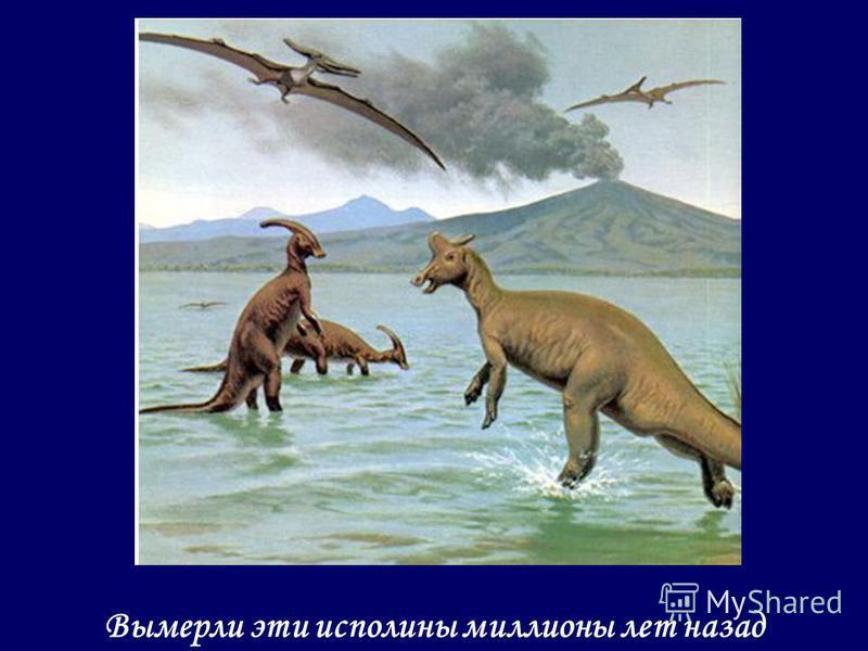 Вымерли эти исполины миллионы лет назад