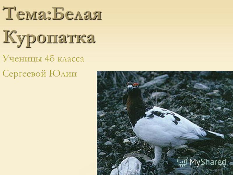 Тема:Белая Куропатка Ученицы 4 б класса Сергеевой Юлии
