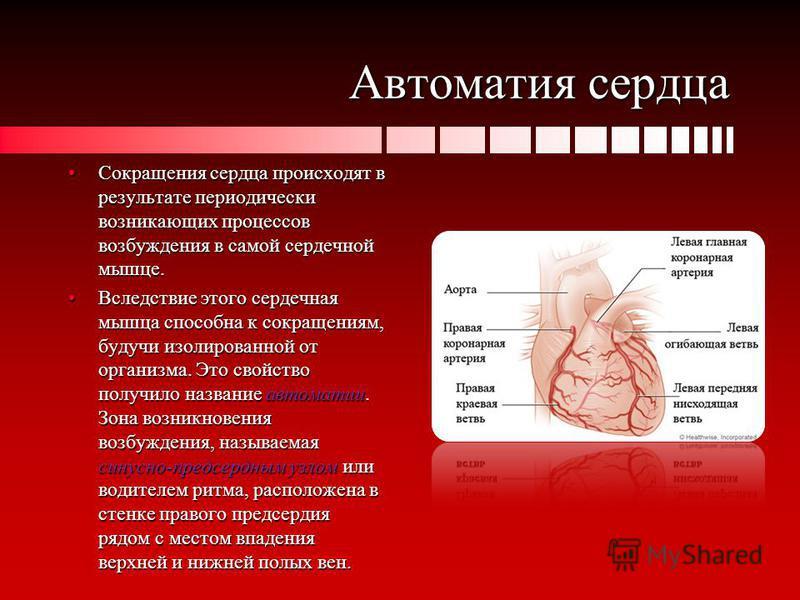 Автоматия сердца Сокращения сердца происходят в результате периодически возникающих процессов возбуждения в самой сердечной мышце.Сокращения сердца происходят в результате периодически возникающих процессов возбуждения в самой сердечной мышце. Вследс