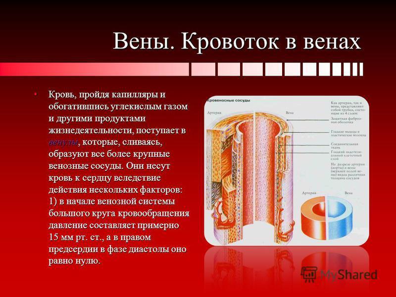 Вены. Кровоток в венах Кровь, пройдя капилляры и обогатившись углекислым газом и другими продуктами жизнедеятельности, поступает в венулы, которые, сливаясь, образуют все более крупные венозные сосуды. Они несут кровь к сердцу вследствие действия нес