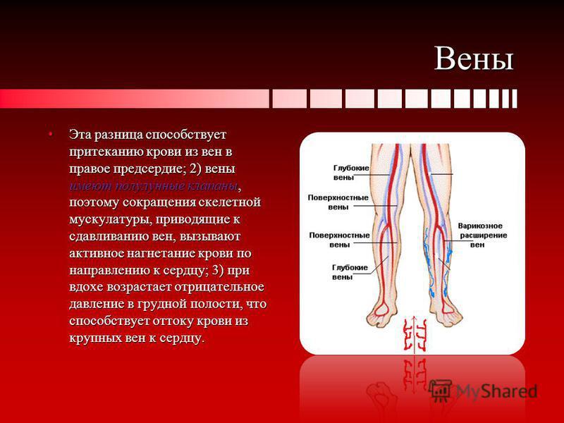 Вены Эта разница способствует притеканию крови из вен в правое предсердие; 2) вены имеют полулунные клапаны, поэтому сокращения скелетной мускулатуры, приводящие к сдавливанию вен, вызывают активное нагнетание крови по направлению к сердцу; 3) при вд
