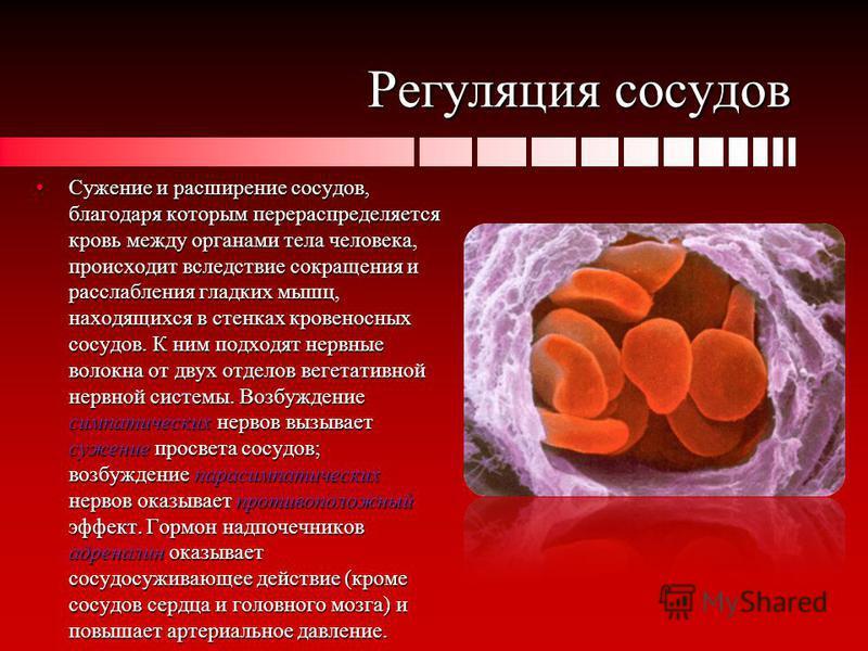 Регуляция сосудов Сужение и расширение сосудов, благодаря которым перераспределяется кровь между органами тела человека, происходит вследствие сокращения и расслабления гладких мышц, находящихся в стенках кровеносных сосудов. К ним подходят нервные в