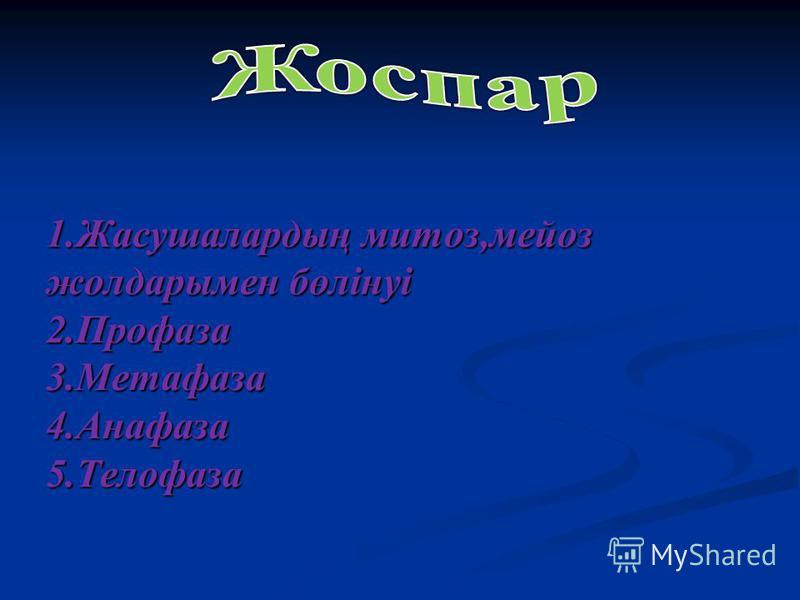 1.Жасушалардың митоз,мейоз жолдарымен бөлінуі 2.Профаза 3.Метафаза 4.Анафаза 5.Телофаза