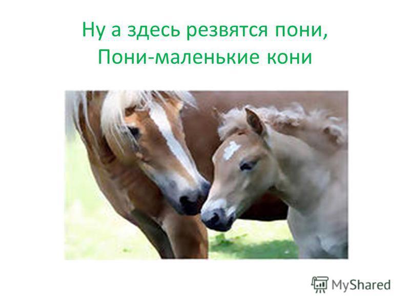 Ну а здесь резвятся пони, Пони-маленькие кони