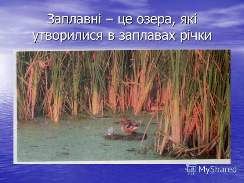 Заплавні – це озера, які утворилися в заплавах річки