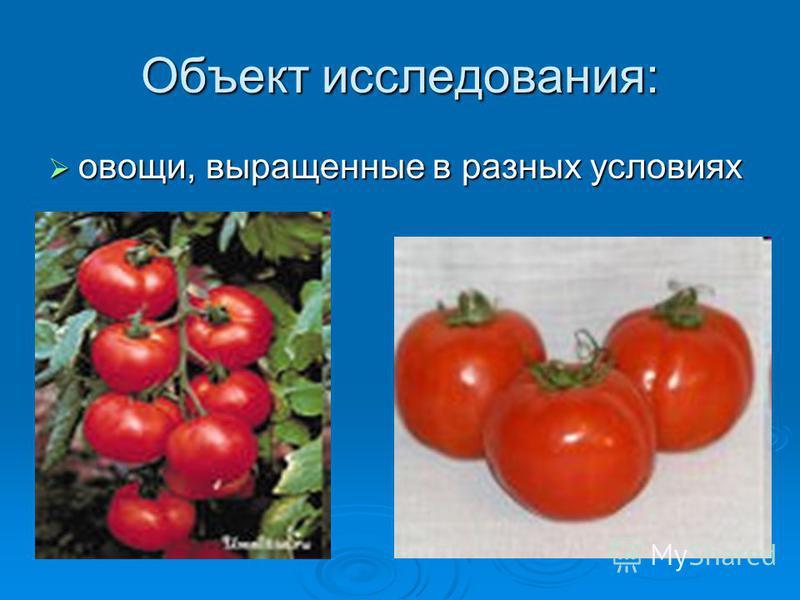 Объект исследования: овощи, выращенные в разных условиях овощи, выращенные в разных условиях