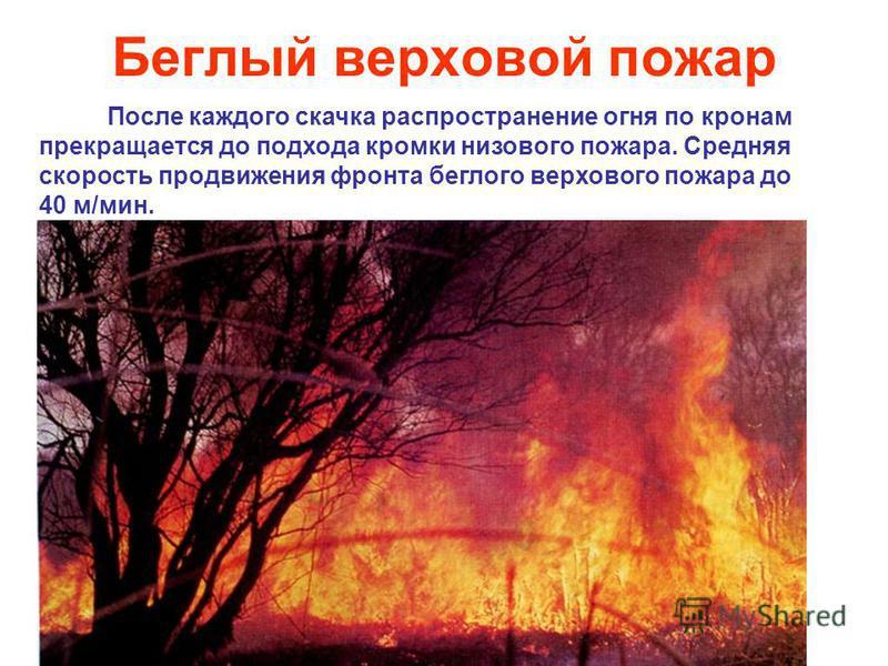 Беглый верховой пожар После каждого скачка распространение огня по кронам прекращается до подхода кромки низового пожара. Средняя скорость продвижения фронта беглого верхового пожара до 40 м/мин.