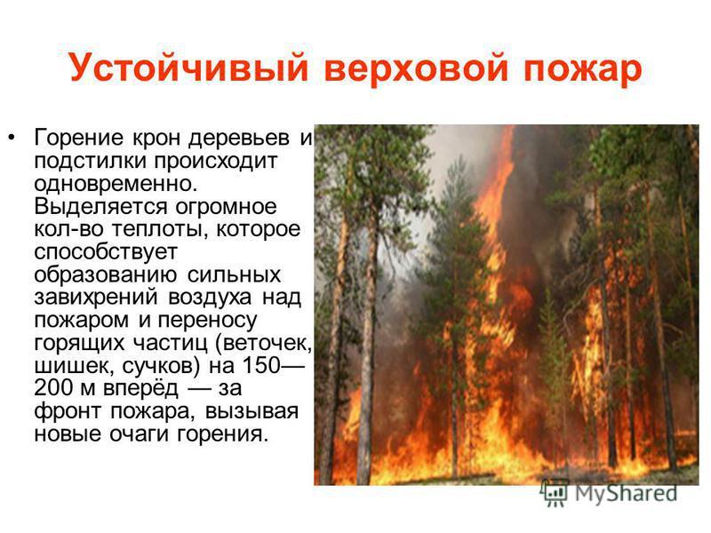 Устойчивый верховой пожар Горение крон деревьев и подстилки происходит одновременно. Выделяется огромное кол-во теплоты, которое способствует образованию сильных завихрений воздуха над пожаром и переносу горящих частиц (веточек, шишек, сучков) на 150