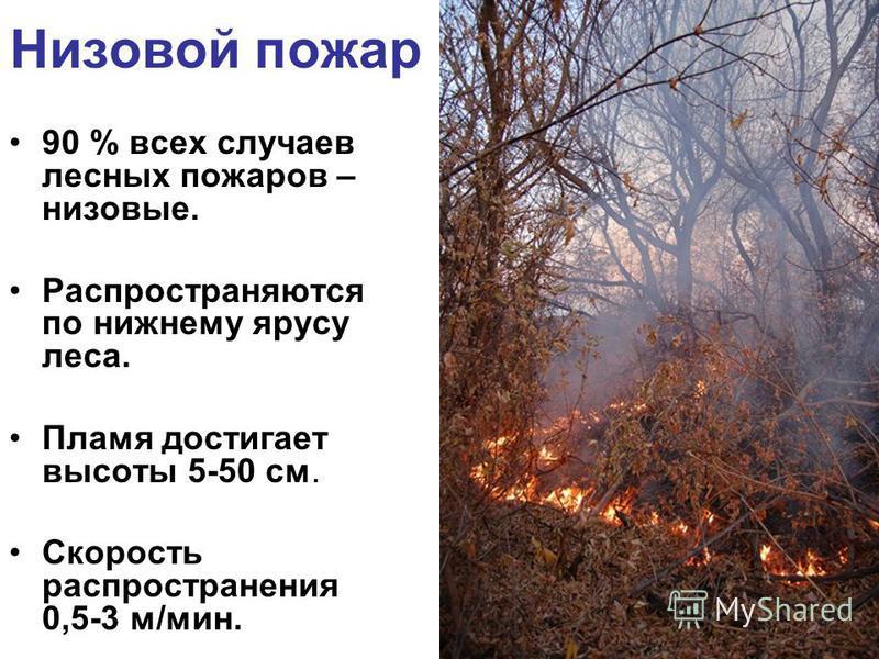 Низовой пожар 90 % всех случаев лесных пожаров – низовые. Распространяются по нижнему ярусу леса. Пламя достигает высоты 5-50 см. Скорость распространения 0,5-3 м/мин.