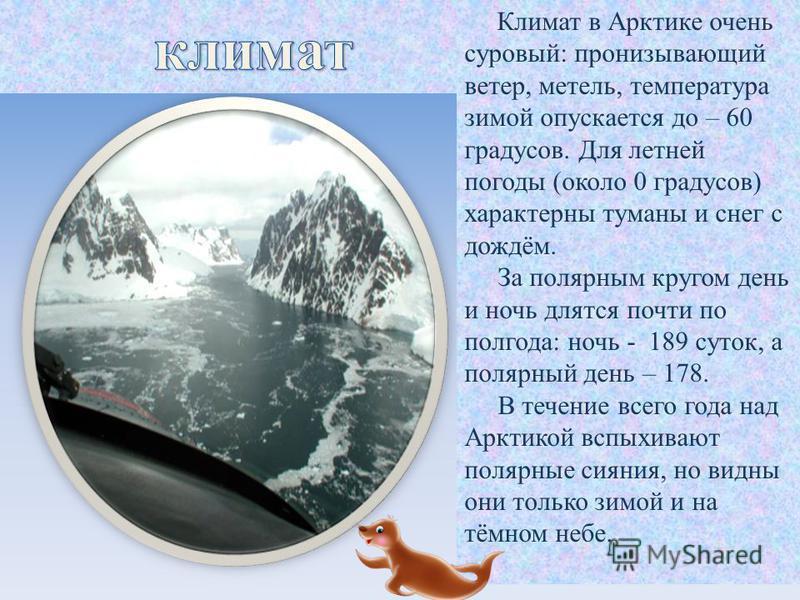 Климат в Арктике очень суровый: пронизывающий ветер, метель, температура зимой опускается до – 60 градусов. Для летней погоды (около 0 градусов) характерны туманы и снег с дождём. За полярным кругом день и ночь длятся почти по полгода: ночь - 189 сут