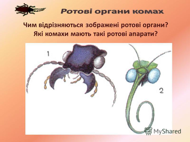Чим відрізняються зображені ротові органи? Які комахи мають такі ротові апарати?