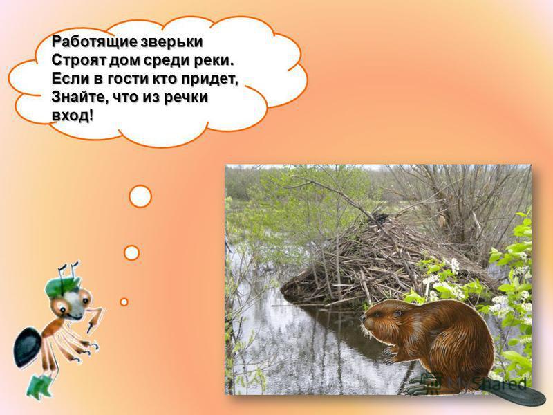 Работящие зверьки Строят дом среди реки. Если в гости кто придет, Знайте, что из речки вход!