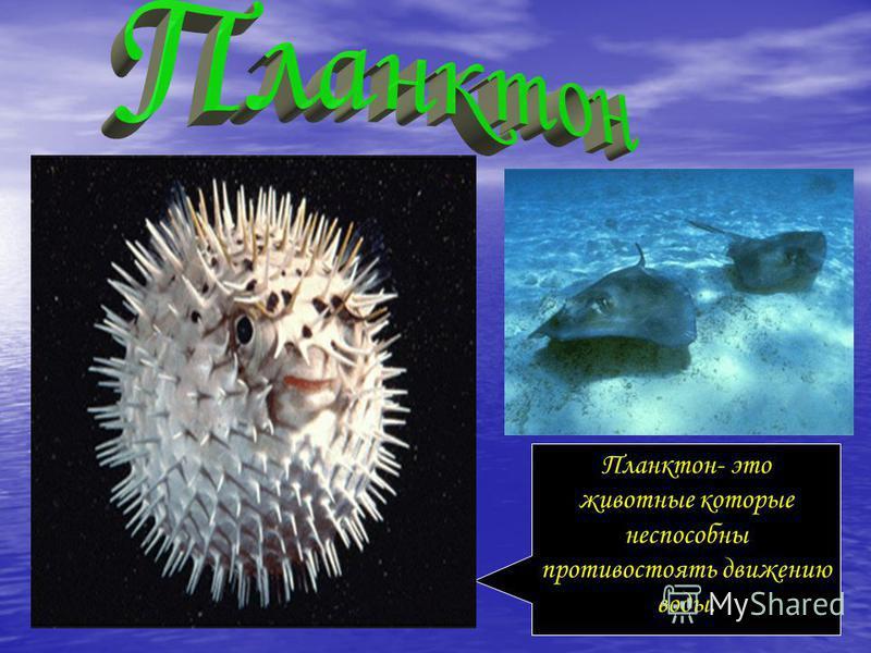 Планктон- это животные которые неспособны противостоять движению воды.